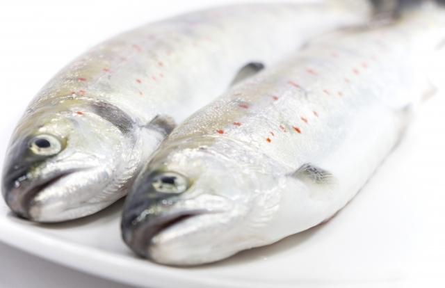 あまごの生魚