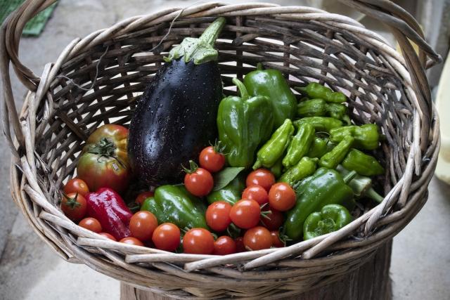 夏野菜の例、トマト・ピーマン・ししとう・なす・おくら